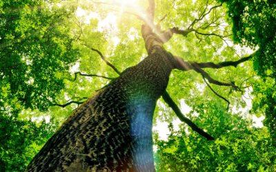 Waldbaden – Stressabbau in der Natur